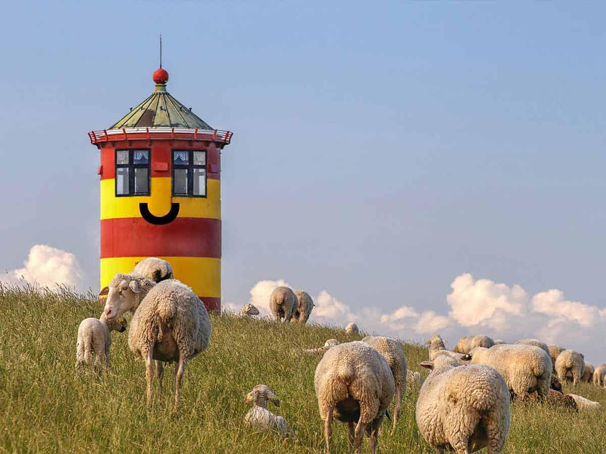 """In diesem Bild sieht man den Leuchturm von Pilsum oder auch der """"Otto-Turm"""" genannt. Im Vordergrund befinden sich viele Schafe auf dem Deich."""